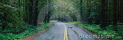 Road in Olympic National Park, WA
