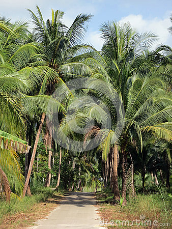 Road through the palm grove