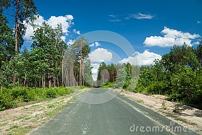 Road through the pine forest