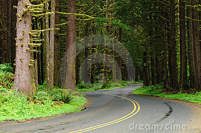 Road through rain forest