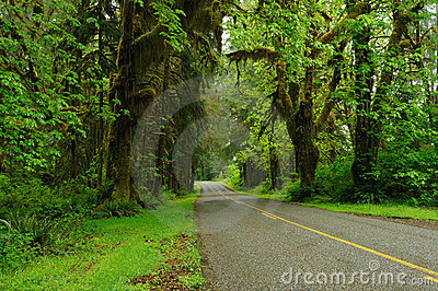 Road in rain forest