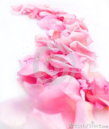 Road of rose petals