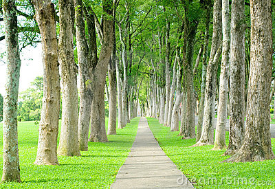 Road through row of trees
