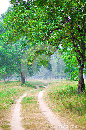Road running between green trees in summer