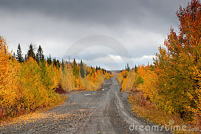 Road in russian taiga