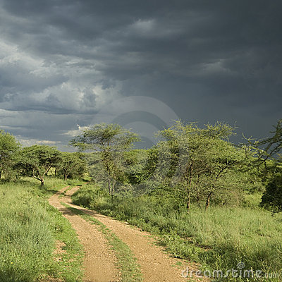 Road through the serengeti reserve