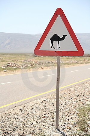 Road sign with camel