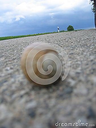 Road snail
