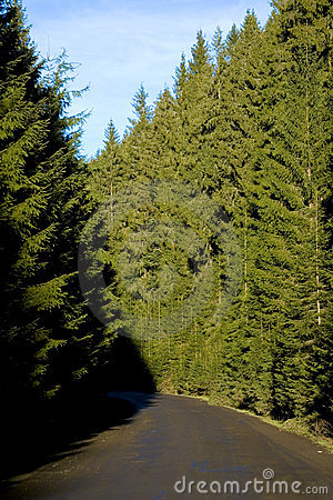 Free Road Through A Thick Forest Stock Image - 1927581