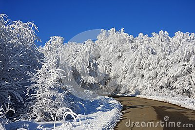 The road to dream-world of snow forest