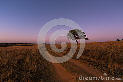 Road to nowhere and lone tree Stock Photo