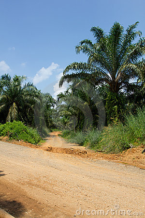 Road to oil palm tree plantation area.