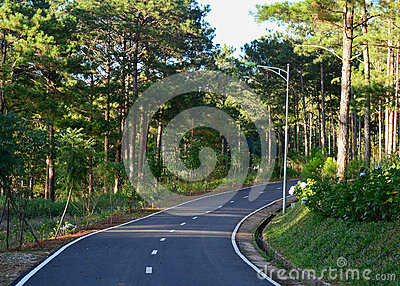 The road to pine tree forest in Dalat, Vietnam Stock Photo