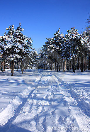 Road to snowy forest