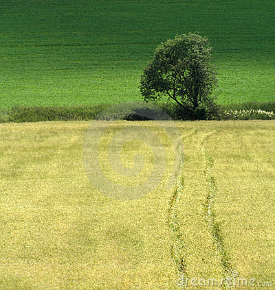 Free Road To The Tree Stock Photography - 2730452