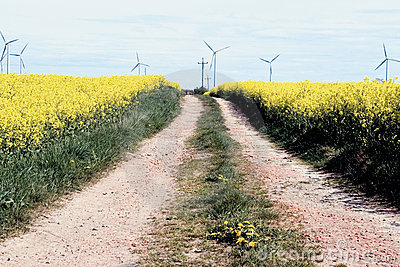 Road to wind turbines.
