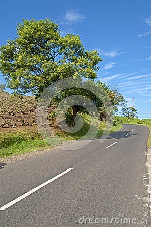 The road and the tree