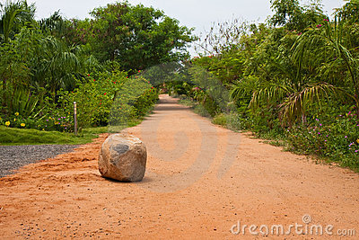 Road in a Tropical Resort