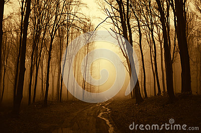 Road trough a dark scary surreal forest with fog