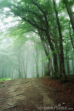 Road trough a green forest with fog