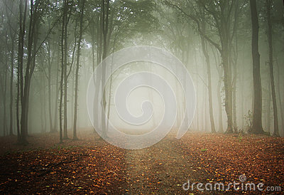 Road trough a mysterious forest with fog in autumn