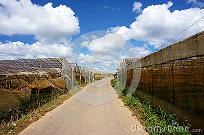 The road unde -blue sky Editorial Image