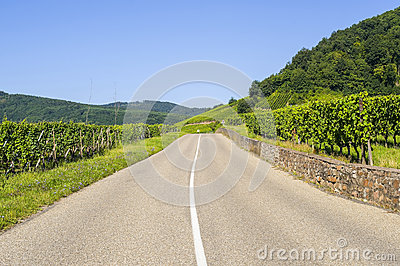 Road in the vineyards of Alsace