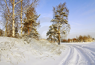 Road through the winter forest
