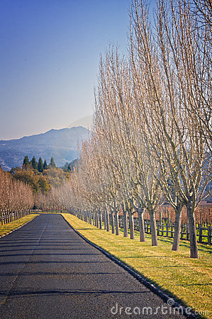 Free Road With Trees, Wine Country California Royalty Free Stock Images - 22634539