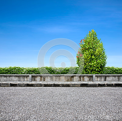 Roadside  pavement and tree