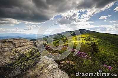 Roan Mountain Appalachian Spring Flowers NC