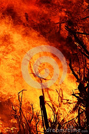 Free Roaring Flames Of Out Control Wildfire At Night Time Stock Images - 104149394