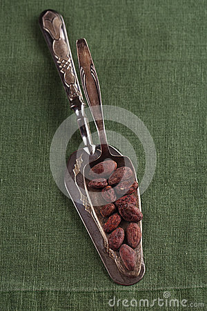 Roasted cocoa chocolate beans on silver spoon and linen