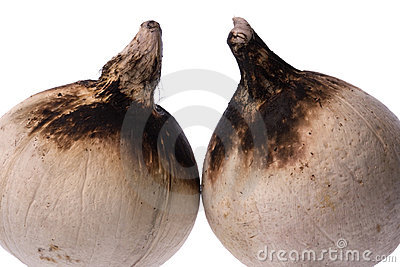 Roasted coconuts