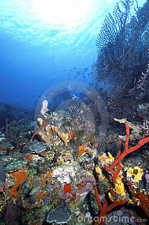 Roatan Reef 1986