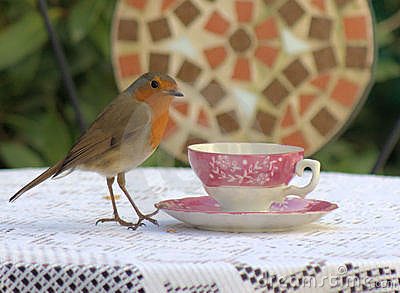 Robin and china cup and saucer