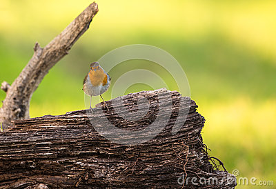 Robin on log