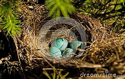 Robin s eggs