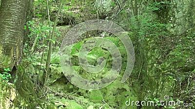 Rocce con erba nella montagna video d archivio