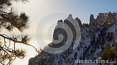 Rochas na neve Entre as rochas cresça o pinho filme