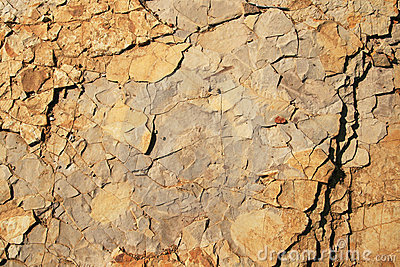 Rock background with fossils