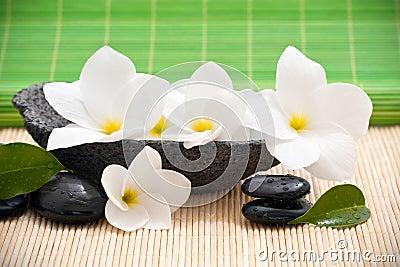 Rock bowl with frangipani