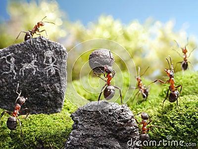 Rock carvings, ant tales