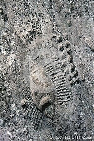 Rock carvings in Qatar
