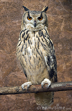 ... know as the Eurasian Eagle owl, Indian Eagle owl and Bengal Eagle owl