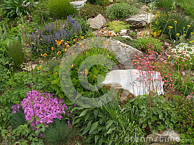 Rock garden in the spring