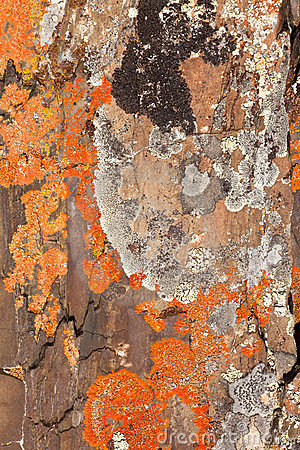 Rock Lichens Background Pattern