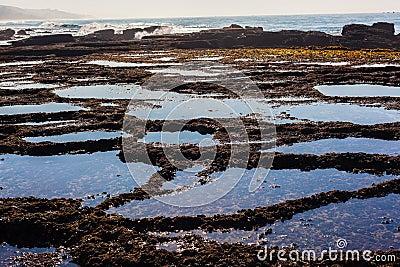 Rock Shelf Pools Seaweed Ocean