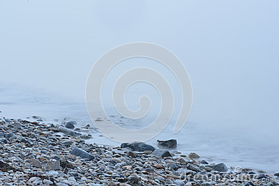Rock strewn Coastal Maine Beach in heavy fog