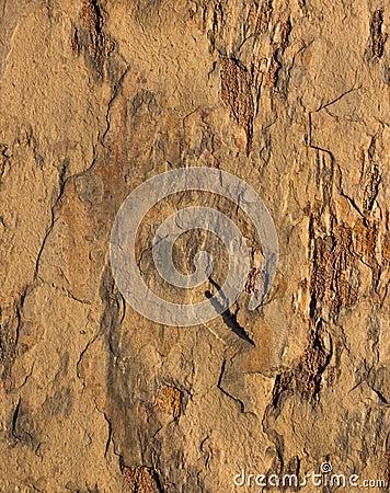 Rock Texture Color